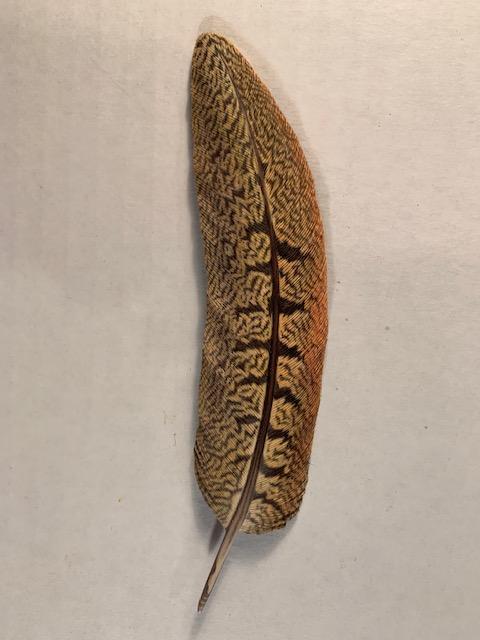 Pheasant Feather (6 1/2 x 1 1/2) $550.